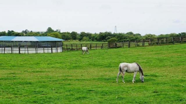 競馬は牧場が左右する。ノーザンファームは生産界の巨人。